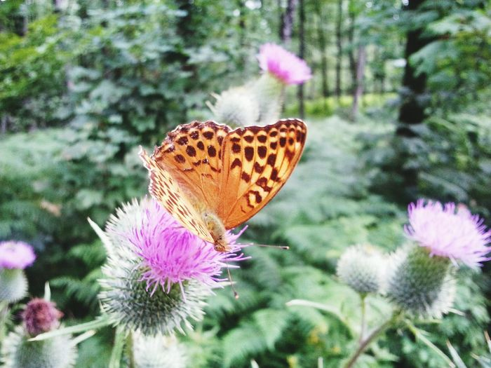 Beautiful Butterfly in Werne A.d. Lippe *.* Nature