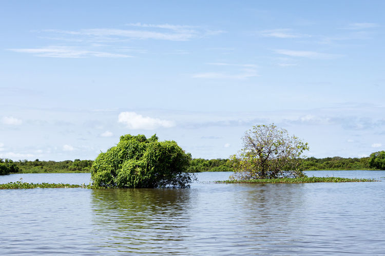 Tonle Sap Lake Water Plant Tree Lake Nature Outdoors Flood Flooded Climate Climate Change Environment Tonle Sap Lake Tropical Forest Jungle Submerged Inundation Global Warming Trees Sunny Cambodia Environmental Issues Conservation Ecology EyeEm Best Shots