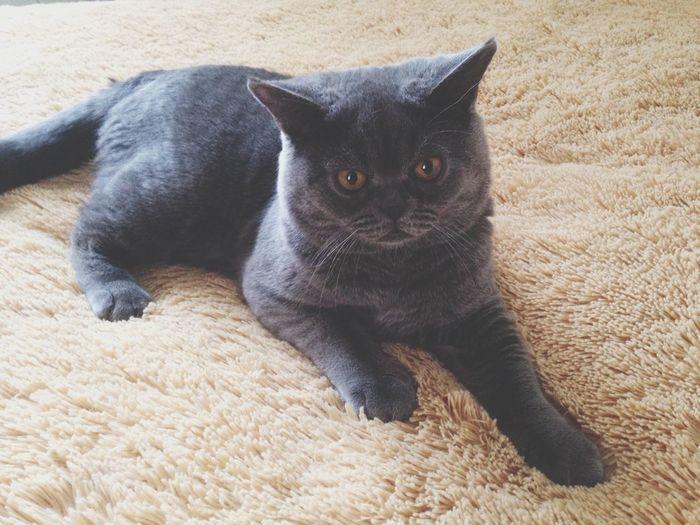 Cat Basya