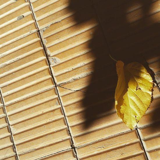 Otoño sanjuniiino, niiiiño. Otoño Sanjuan Travelgram Worldcoolhunters shunters Sol y mas sol. Postales sanjuaninas Fall Leaves Leavesfalling