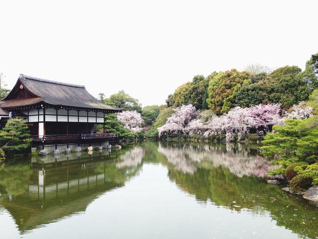 spring Sakura Kyoto Japan
