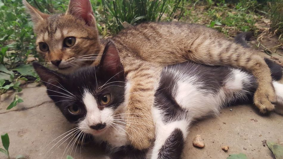 Brother Love Cats Kittys  NoEditNoFilter Play Cute Cute Pets Lovely Kitty Maximum Closeness Adapted To The City Sommergefühle