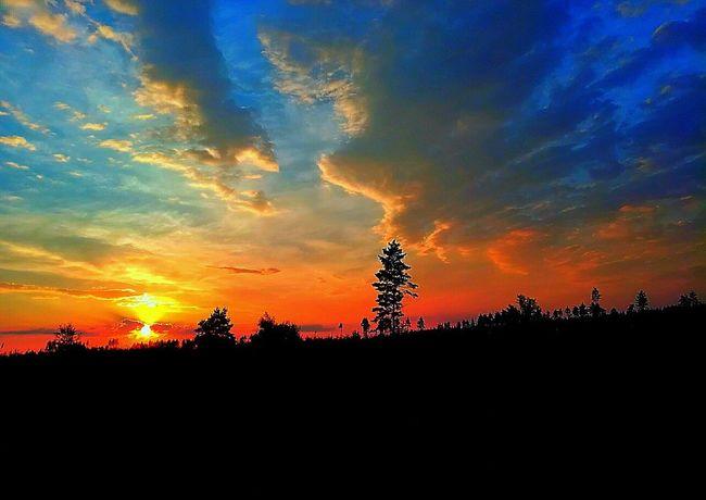 Sunset Silhouette Dramatic Sky Cloud - Sky Tree Nature Sky