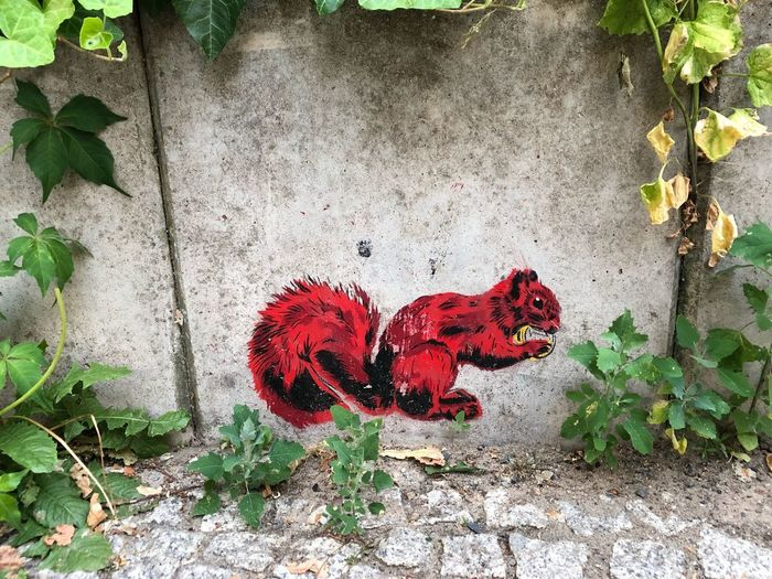 Graffiti Urban Art Squirrel Street Art Art Red Leaf Heart Shape Plant Part Day Nature Outdoors Wall - Building Feature