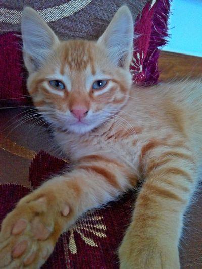 Catlike small and beloved Streamzoofamily EyeEmBestPics Taking Photos Cat Lovers