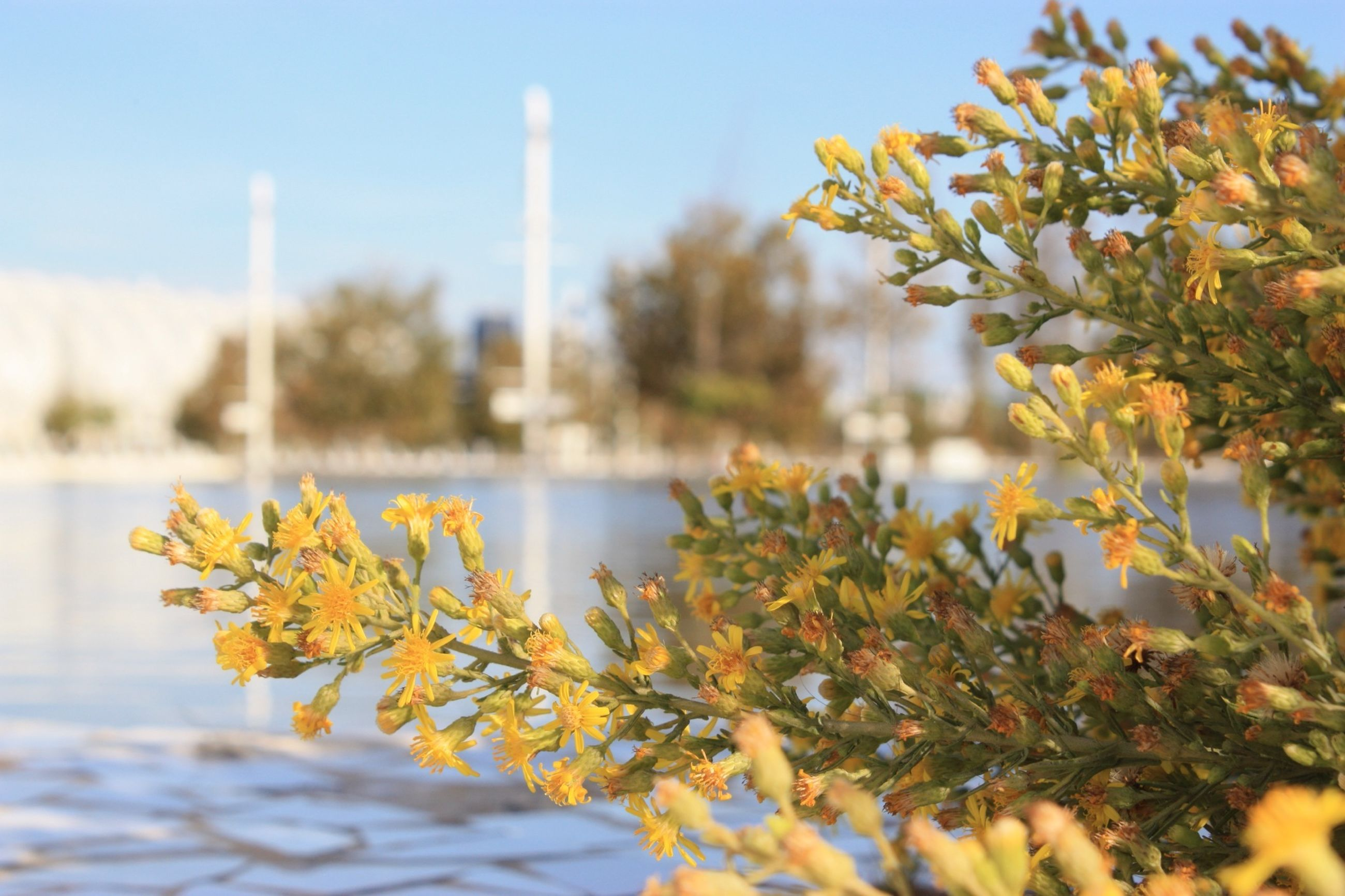 growth, focus on foreground, clear sky, flower, yellow, nature, selective focus, freshness, plant, close-up, leaf, tree, beauty in nature, sky, day, fragility, outdoors, sunlight, growing, no people