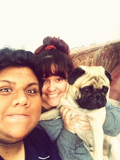 Pug Love Pug Life ❤ Pug Life  Ilovepugs Pug Pequeño Frank Pug Chile Family