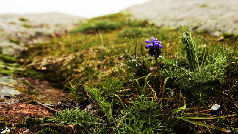 Alone Beauty Beauty In Nature Bulgaria Flower Macro Macro_collection Montains    Narute Violet
