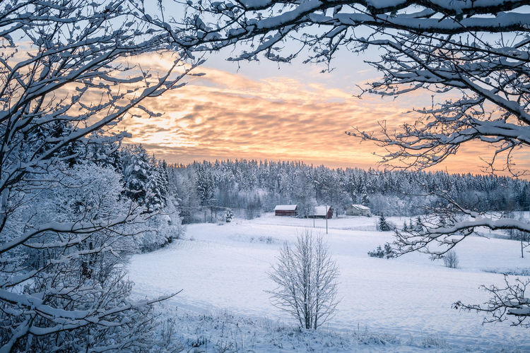 Scenic winter landscape with farm house and sunset at evening light in Finland Tree Snow Winter Cold Temperature Beauty In Nature Scenics - Nature Tranquility Sunset Environment No People Tranquil Scene Sky Landscape White Color Extreme Weather Nature Finland House Farm Cottage Evening Light Blue Atmospheric Mood Winter Sunlight