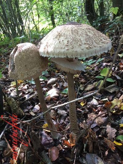 Leckere Fundstücke im Wald 💕💓 Monique52 Hochrhein Südschwarzwald Pilze 🌾 Schön Oder Schön? Mushroom Nature Outdoors Iphonephotography
