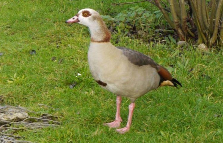 The Birds Taking Photos Panasonic Lumix GX1 nature_collection naturelovers nature Geese