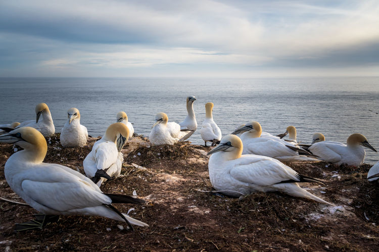 High angle view of birds perching on beach against sky