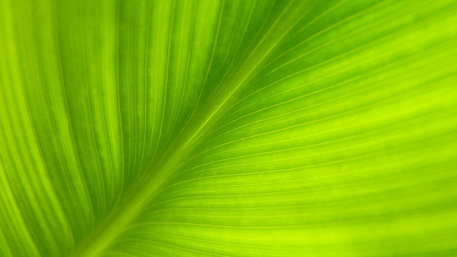 Abstract Abstract Backgrounds Backgrounds Beauty In Nature Brightly Lit Close-up Freshness Frond Full Frame Green Color Growth Leaf Leaf Vein Leaves Nature No People Outdoors Palm Leaf Palm Tree Pattern Plant Plant Part Textured  Textured Effect Tropical Climate