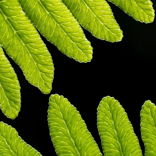 Close-up of leaves against black background