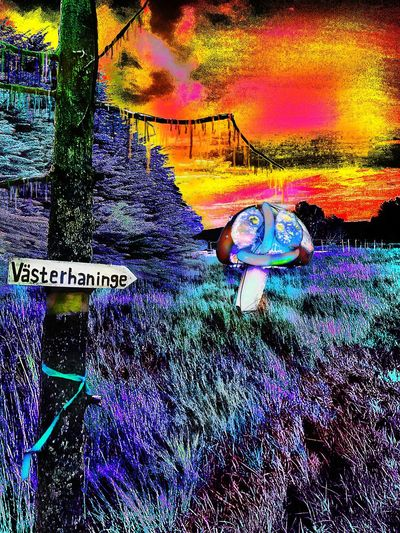 The happy sausage and egg faced mushroom Västerhaninge Vh WTF Somthing Different Mushroom No People Multi Colored Pattern Full Frame Outdoors Creativity Nature Backgrounds Art And Craft