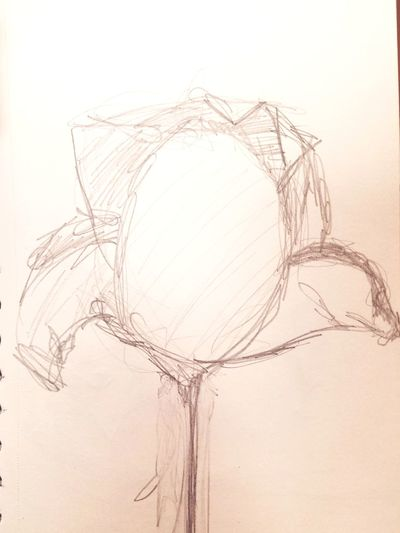 GraphitePencil Graphite Art Drawings Flower Sketch Textured  Textured Effect Nature Backgrounds No People Silhouette Drawing - Art Product Art And Craft Creativity