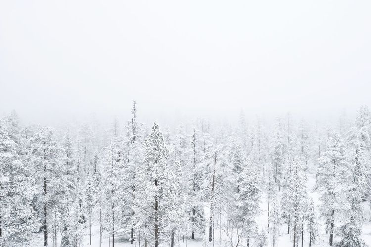 Snow covered forest in Finnish Lapland. Beauty In Nature Cold Cold Temperature Covering Finland Idyllic Landscape Lapland Nature No People Non-urban Scene Outdoors Scenics Season  Sky Snow Snow Covered Tranquil Scene Tranquility Tree Weather White White Color Winter WoodLand