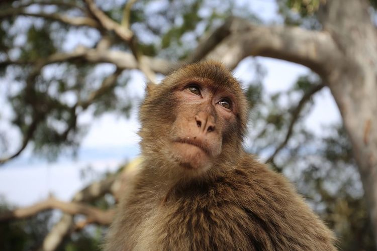 Low Angle View Of Monkey Against Tree
