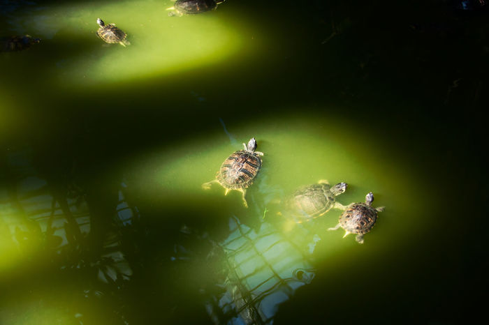 Atocha Sunlight Animal Themes Beauty In Nature Day High Angle View No People Reflections Reptile Shadows Swimming Turtle Water