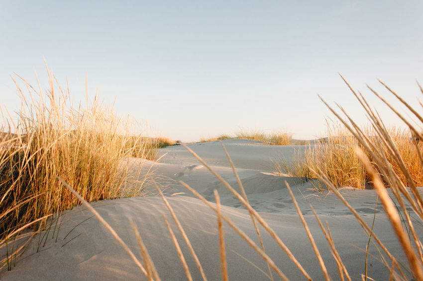 Daydreaming Nikon D5200 VSCO Beauty In Nature Clear Sky Close-up Cold Temperature Day Field Grass Marram Grass Nature Nikonphotography No People Outdoors Sand Sand Dune Scenics Sky Snow Tranquil Scene Tranquility Winter