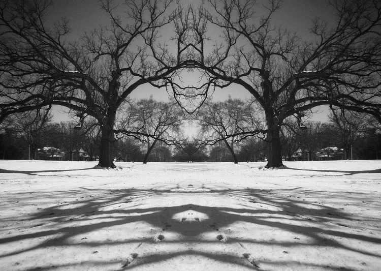 Symmetrical Shadow, January 2017 Snow Winter Tree Bare Tree Nature Branch Outdoors No People Sky Beauty In Nature Blackandwhitephotography Kansas City Symetry