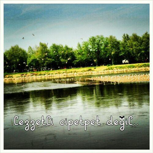 Cipetpet Birds Kus Edirne meric