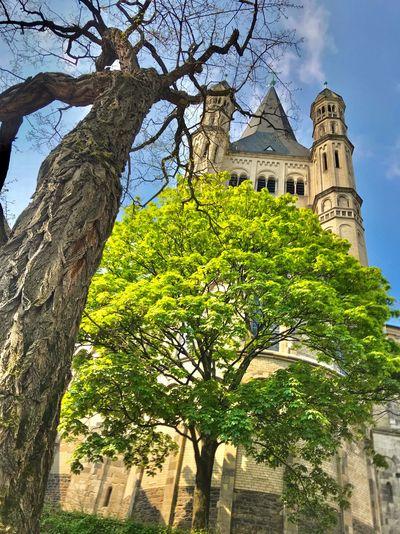 Gross St. Martin Köln Plant Tree Architecture Built Structure Building Exterior Building Growth