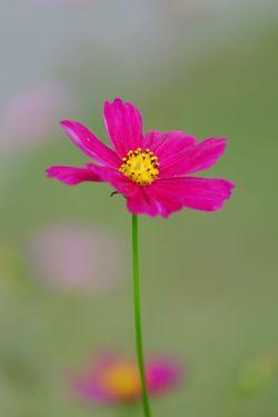 Flowering Plant Flower Freshness Fragility Vulnerability  Beauty In Nature Plant
