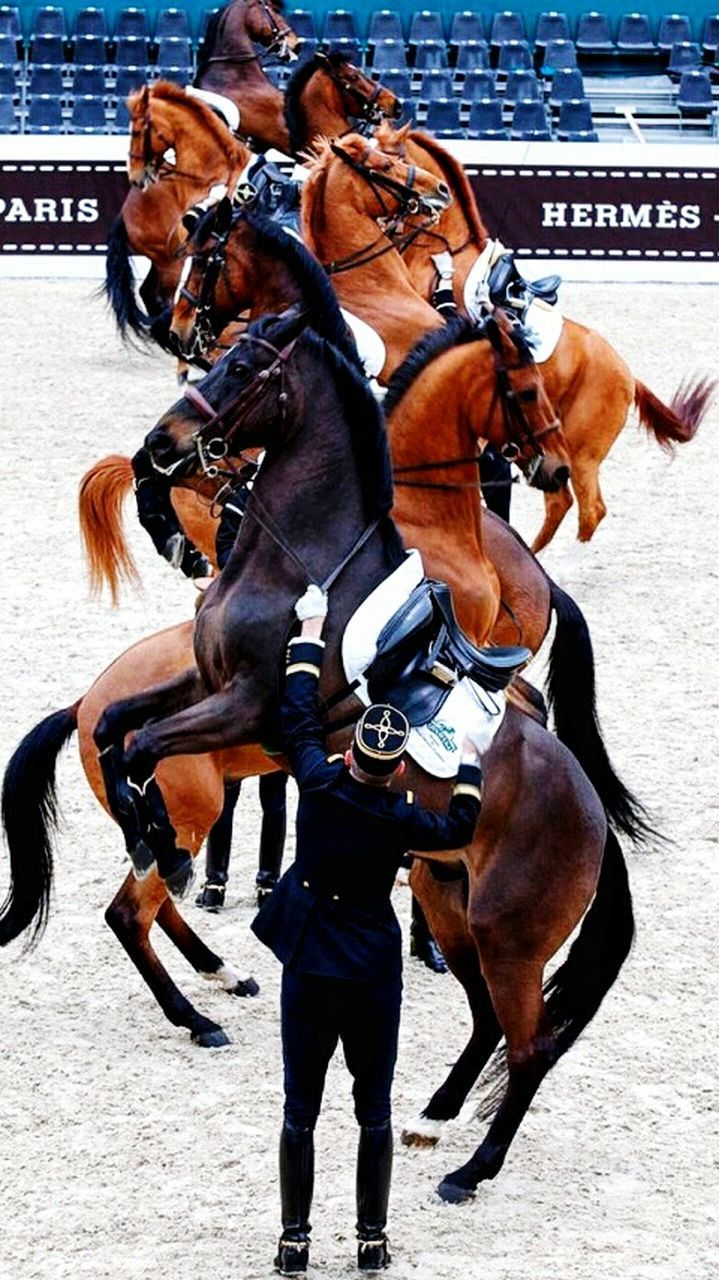 horse, competition, horseback riding, domestic animals, mammal, jockey, animal themes, horse racing, outdoors, sport, brown, day, competitive sport, sports track, sports race, close-up, adult, only men, people