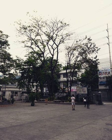 🌳🍃 . Vscocam Vscophilippines Adamsonuniversity ManilaPH Vscofeed Fotografiaunited GrammerPH
