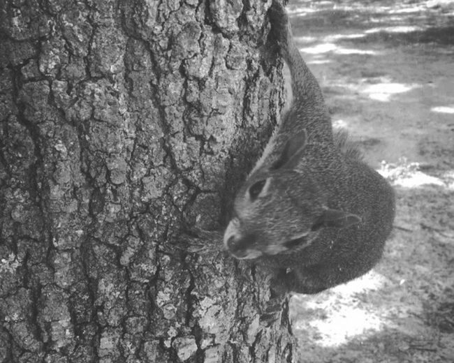Squirrel Right Lane Must Turn Right Black And White Tree Florida Wildlife & Nature Ultimate Japan The Mix Up The OO Mission Fine Art Photography