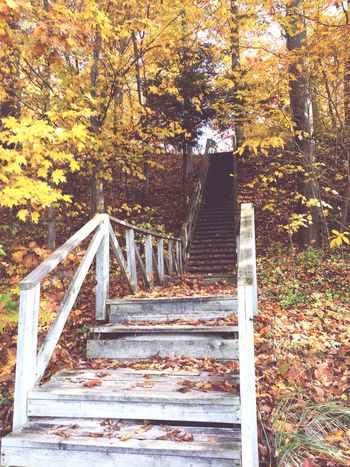 Steps Steps And Staircases Tree Trees Falling Leaves Autumn Autumn Colors Autumn Leaves Staircase Railing Lookingup Walking Around Taking Pictures Beauty In Nature Fall Fall Beauty Michigan Puremichigan Autumn 2016