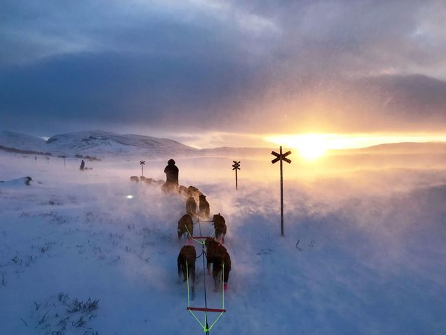 Sleddogs Mansbestfriend Mushing Dogsledding Sleddogs Outdoors Sky Nature Leisure Activity Outdoors Be. Ready. Winter Sunset Snow Be. Ready. EyeEmNewHere