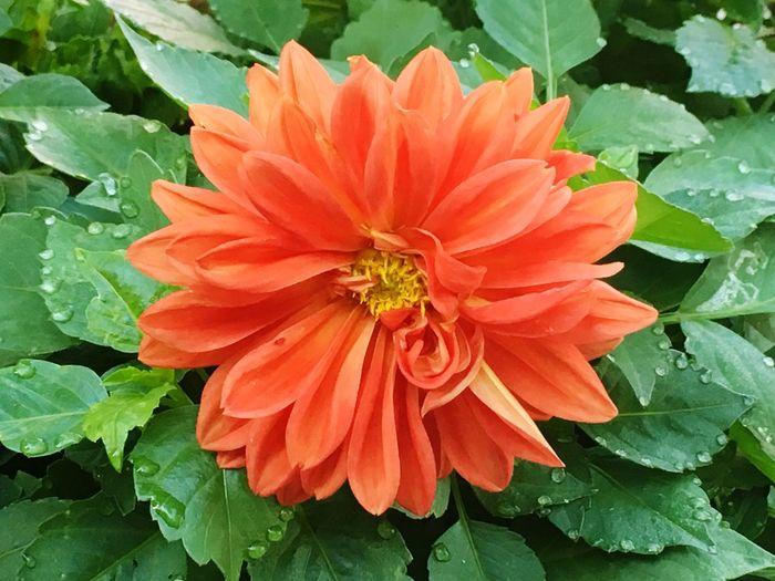 Beauty In Nature Flower Freshness