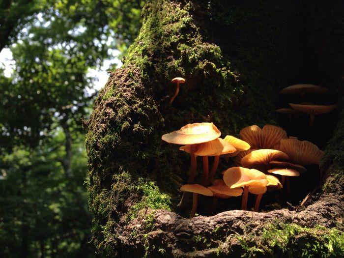 Beautiful Poisonous Mushroom. Forest South Korea JEJU ISLAND  Mushroom