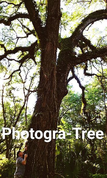 Trees Hugging A Tree Tree Porn Taking Photos That's Me Hanging Out Hello World Photogra-tree