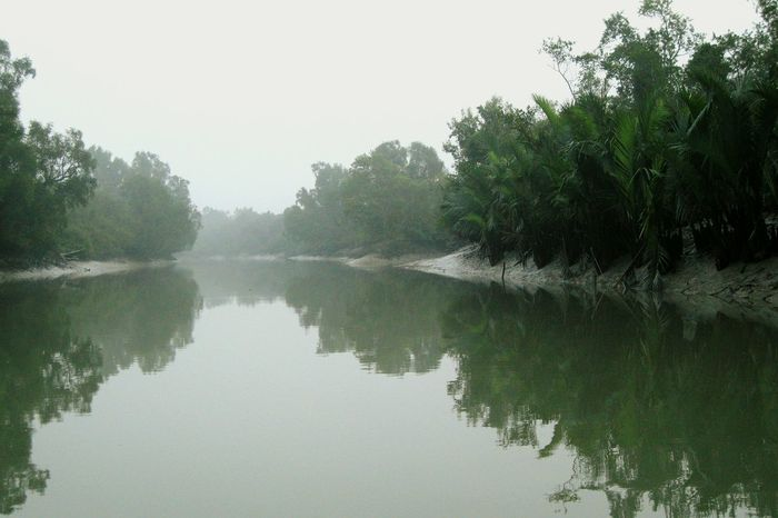 sundarbans, bangladesh Riverscape Mangroves Bangladesh Riverworld No People Reflections Morning Light Misty Morning UNESCO World Heritage Site