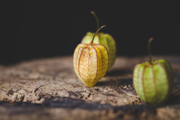 Ground Cherries ASIA Cape Gooseberry Dark Green Medicine Plant Seed Vietnam Art Food Foodphotography Fruit Ground Cherry Loseweight Old Wood Physalis Physalis Angulata Sweet Tasty Tropical Vegetable Vitamin Yellow