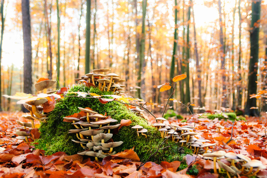 Mushroom kingdom growing on a tree stump Abundance Autumn Autumn Beauty In Nature Close-up Day Forest Growth Moss Mushroom Kingdom Mushrooms Nature No People Outdoors Scenics Tree Tree Stump