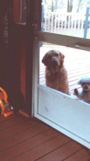 Dogs stareing at me lol ha ha Taking Photos Hello World