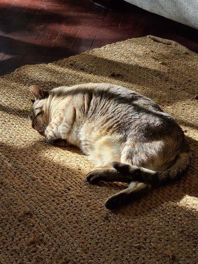 High angle view of cat sleeping on rug