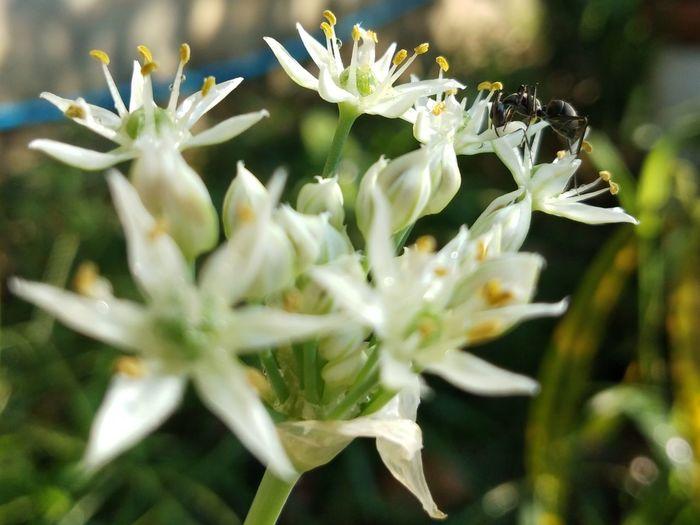 ant ant & ant [แอนท์] Flower Head Flower Herbal Medicine Alternative Medicine Close-up Plant