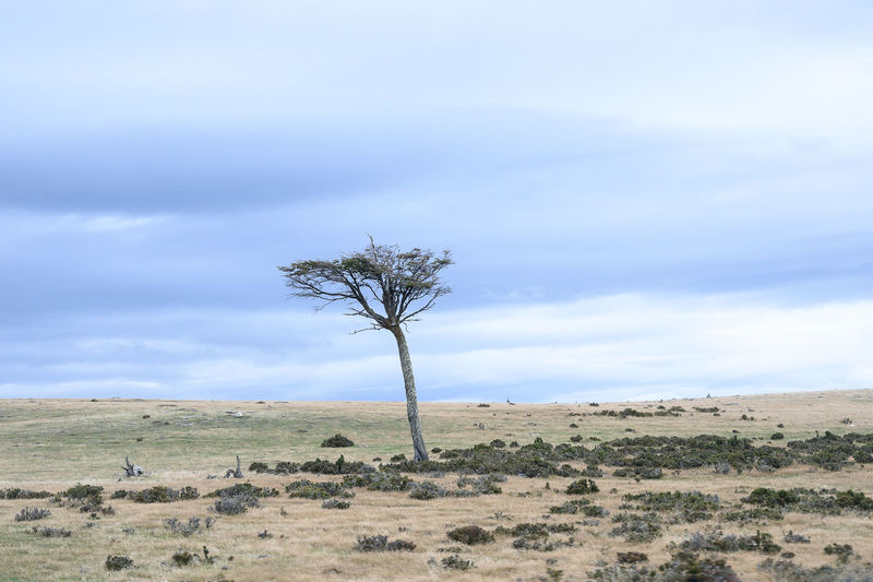 Tree Trees Nature_collection Landscape Plane Patagonia Chile Patagonia Simplicity Is Beauty. Simplicity In Nature My Best Photo Scenics - Nature Beauty In Nature Tranquil Scene Horizon Over Land Semi-arid Remote Tranquility Environment Minimalistic The Great Outdoors - 2019 EyeEm Awards