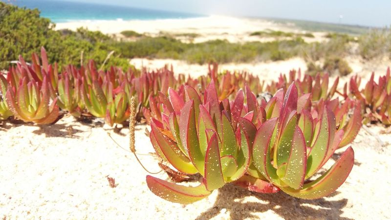 Beach Beach Nature Kind Of Plants 🌱 Eyem Best Shots Nature_collection Nature Photography Eyem Nature Lovers  Nature Beauty Beach Life