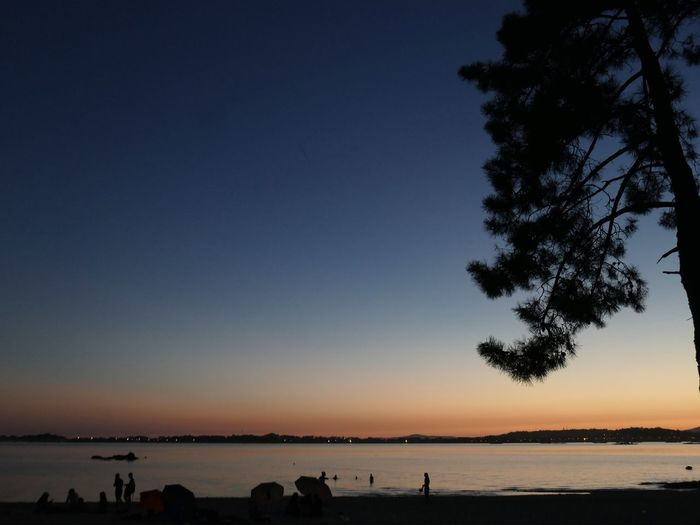 Silhouette trees on beach against clear sky during sunset