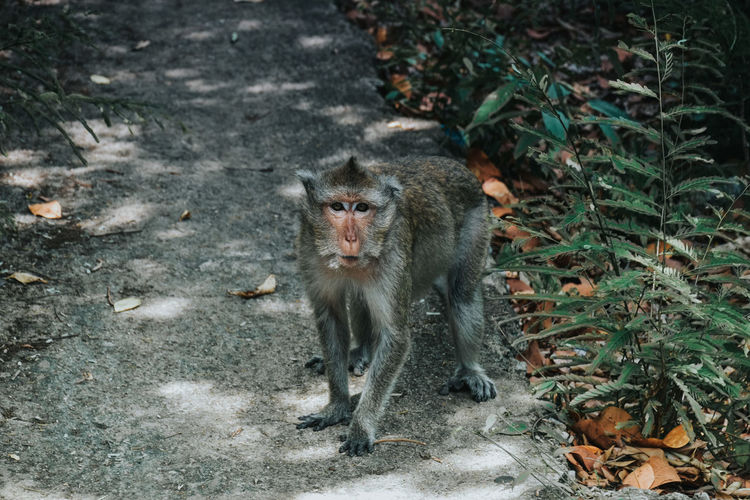 Portrait Of Monkey In Forest