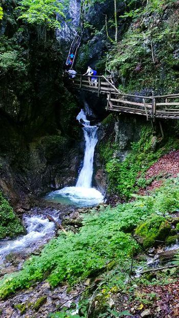 Waterfall Beauty In Nature Woodbridge Woodwalking Austria Miniwaterfall