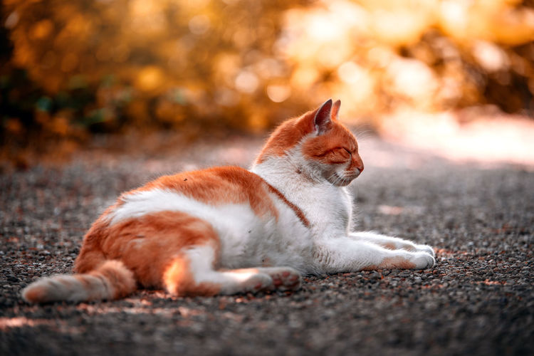 Tomcat Carlos in a local park Nature Taking Photos Animal Animal Themes Cat Day Domestic Domestic Animals Domestic Cat Feline Ginger Cat Katze Lying Down Mammal Natur Nature No People One Animal Orange Color Pets Relaxation Selective Focus Sunlight Vertebrate Whisker