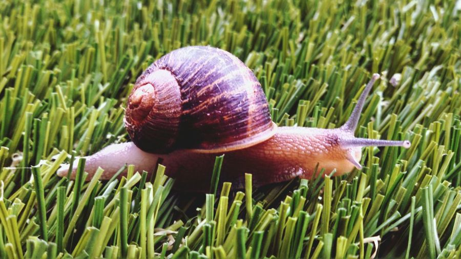 Close-up side view of snail on grass