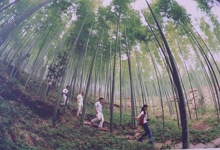 Famous Wood Japan Show @ Festivaldelloriente Napoli Mostradoltremare